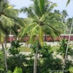 Palmtree Haus in Induruwa