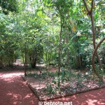 Herbal Garden Bentota