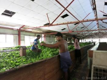 Teefabrik-SriLanka10